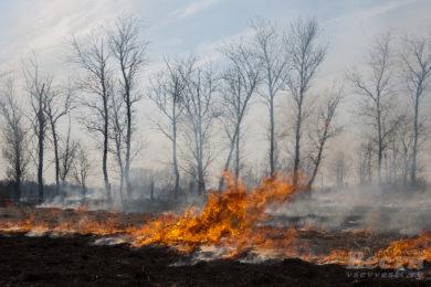 В Ленобласти с 16 апреля объявлен пожароопасный сезон