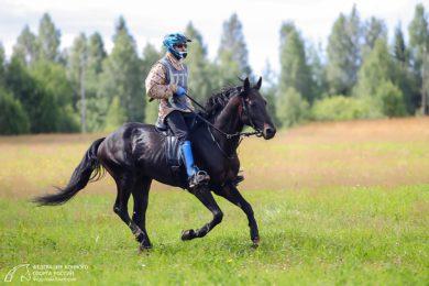 На Колтушских холмах пройдет международное соревнование по конному спорту